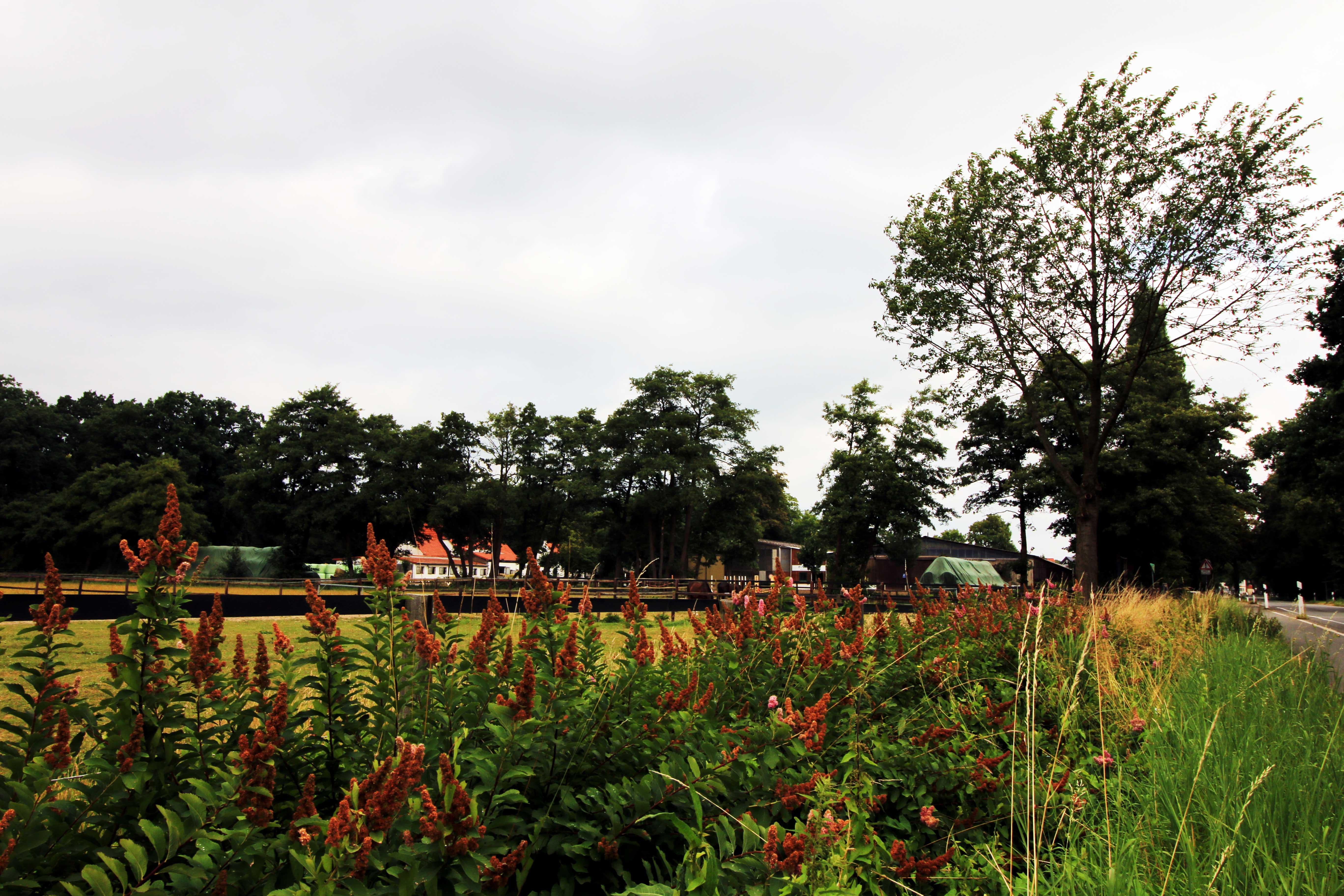 Wiese und Hof in der Osterholzer Feldmark