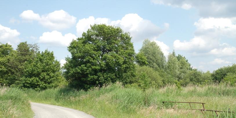Weg im Park Links der Weser
