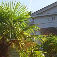 Palme vor dem Goethe Theater