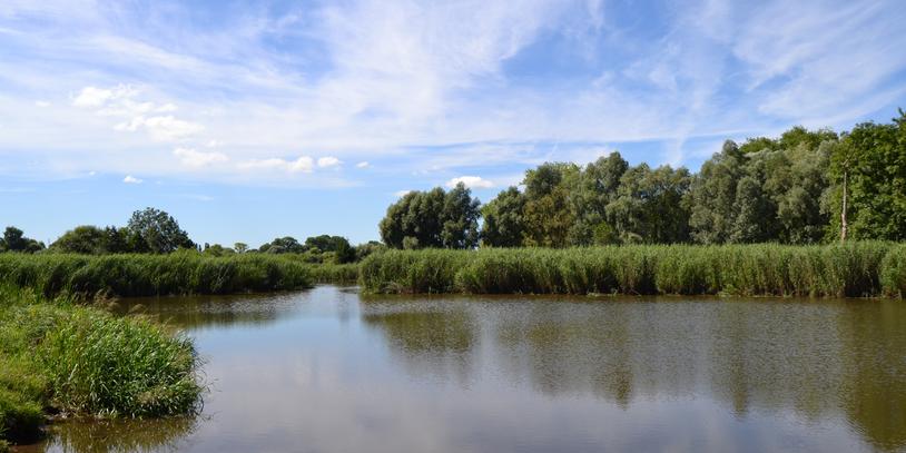 Ein Fluss mit Pflanzen und Bäumen um ihn herum, blauer Himmel mit leichten Wolken, der sich im Wasser spiegelt.