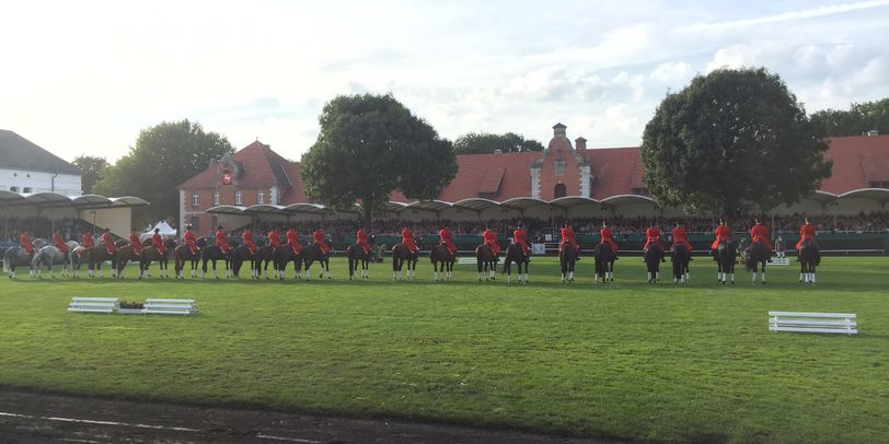 Die traditionelle Hengstparade im Celler Landgestüt.