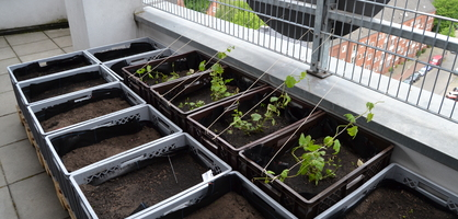 Beete in grauen Kisten, teilweise mit grünen Pflanzen bepflanzt; Quelle: bremen.online/MDR