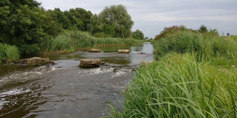 Ein Fluss der von grünem Schilf umgeben ist und in dessen Mitte sich Steine befinden