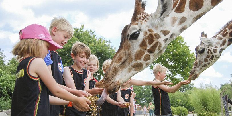 Kinder füttern Giraffen im Jaderpark