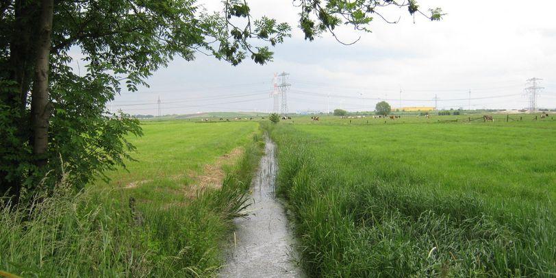 Ein Graben im grünen Niedervieland.