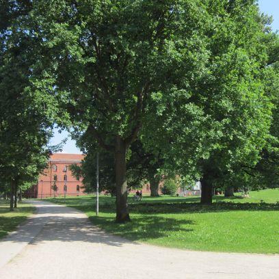 Ein von Bäumen flankierter Weg führt zu einem roten Backsteingebäude