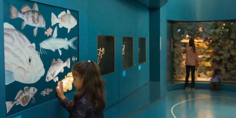 Kind berührt eine Tafel mit leuchtenden Fischen