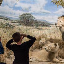Kinder auf Safari