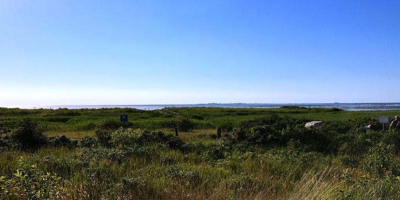 Eine grüne Wiese am Meer. Der Himmel ist strahlend blau.