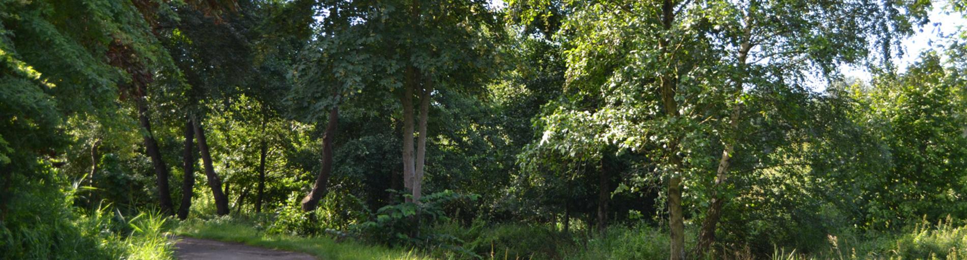 Ein Spazierweg in der Sonne umrahmt von Bäumen und Gras.