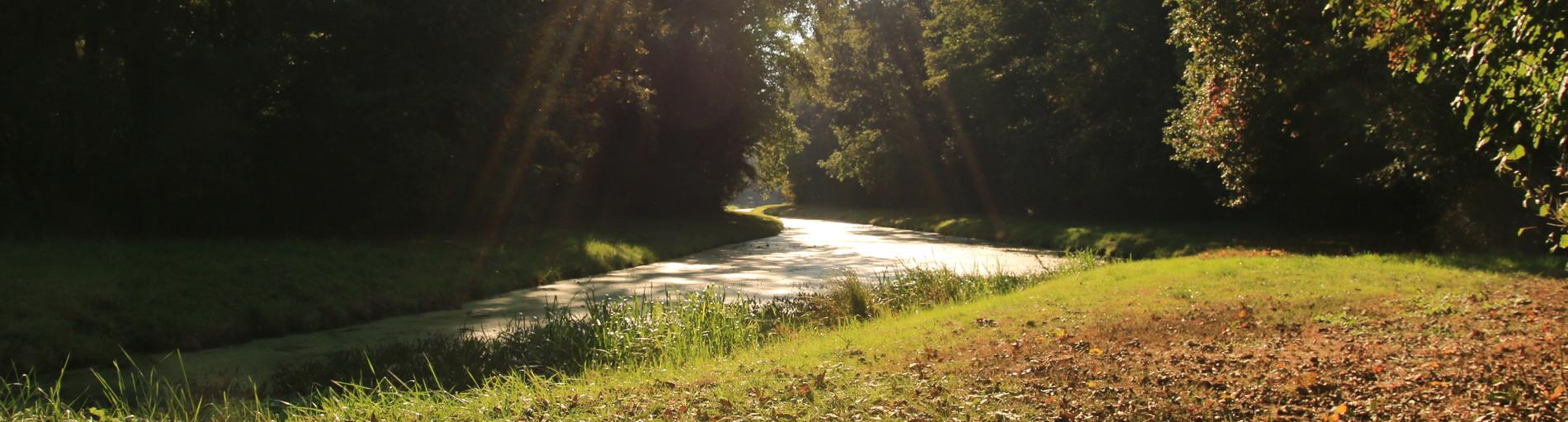 Blick auf einen kleinen Fluss im Stadtwald bei Sonnenschein