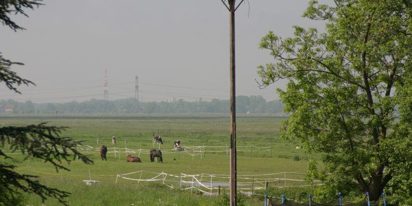 Ein Storchennest, Pferde und Weideland im Hintergrund; Quelle: Ortsamt Seehausen