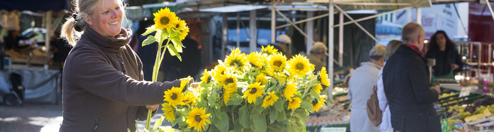 Sonnenblumen auf dem Findorffmarkt