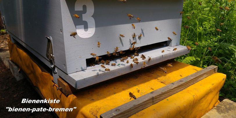 Bienen summen um eine Bienenkiste herum.