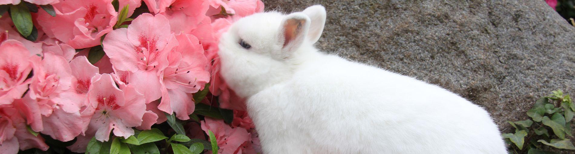 Kaninchen und Azaleen in der botanika Bremen.
