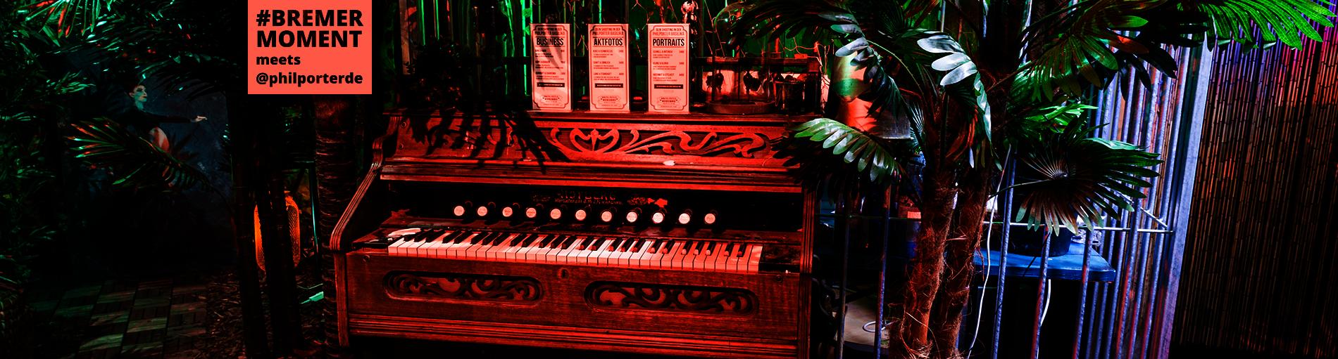 Ein Harmonium inmitten einer Urwald-artigen Umgebung.