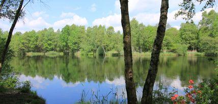 Blick auf einen Teich, umgeben von grünen Bäumen und Sträucher
