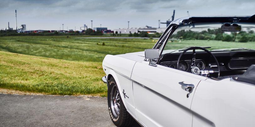 Im Vordergrund ein weißer Mustang, im Hintergrund der Ausblick auf eine Wiese