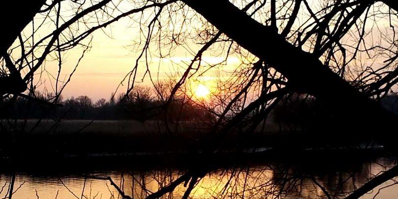 Ein Sonnenuntergang am Fluss, durch Bäume hindurch fotografiert.