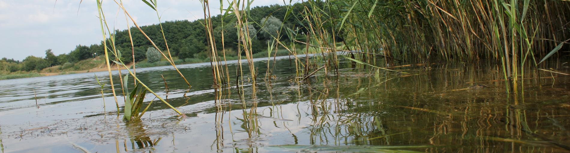 Klares Wasser am Ufer eines Sees