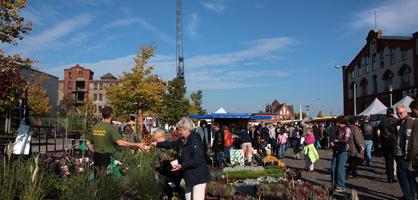 Eine Frau kauft Blumen auf dem Herbstmarkt in der Überseestadt
