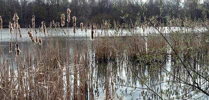 Blick auf einen Teich in der Grünanlage in Arsten
