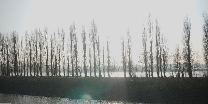 Zu sehen ist eine lange Reihe von schmalen Bäumen auf einer langen Insel. Ein Sonnenstrahl reflektiert sich.
