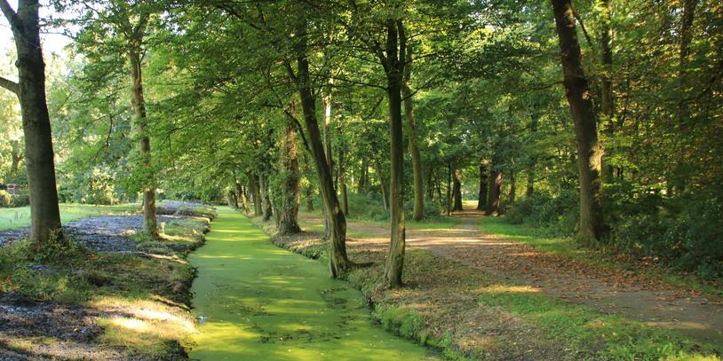 Eindruck vom Wolfskuhlenpark mit vielen grünen Bäumen und einem Graben
