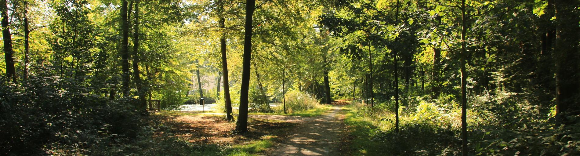 Ein Weg in einem Park bei Sonnenschein