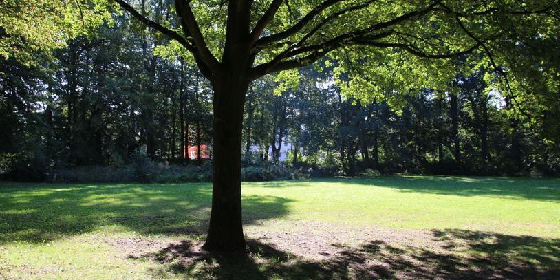 Ein großer Baum spendet Schatten