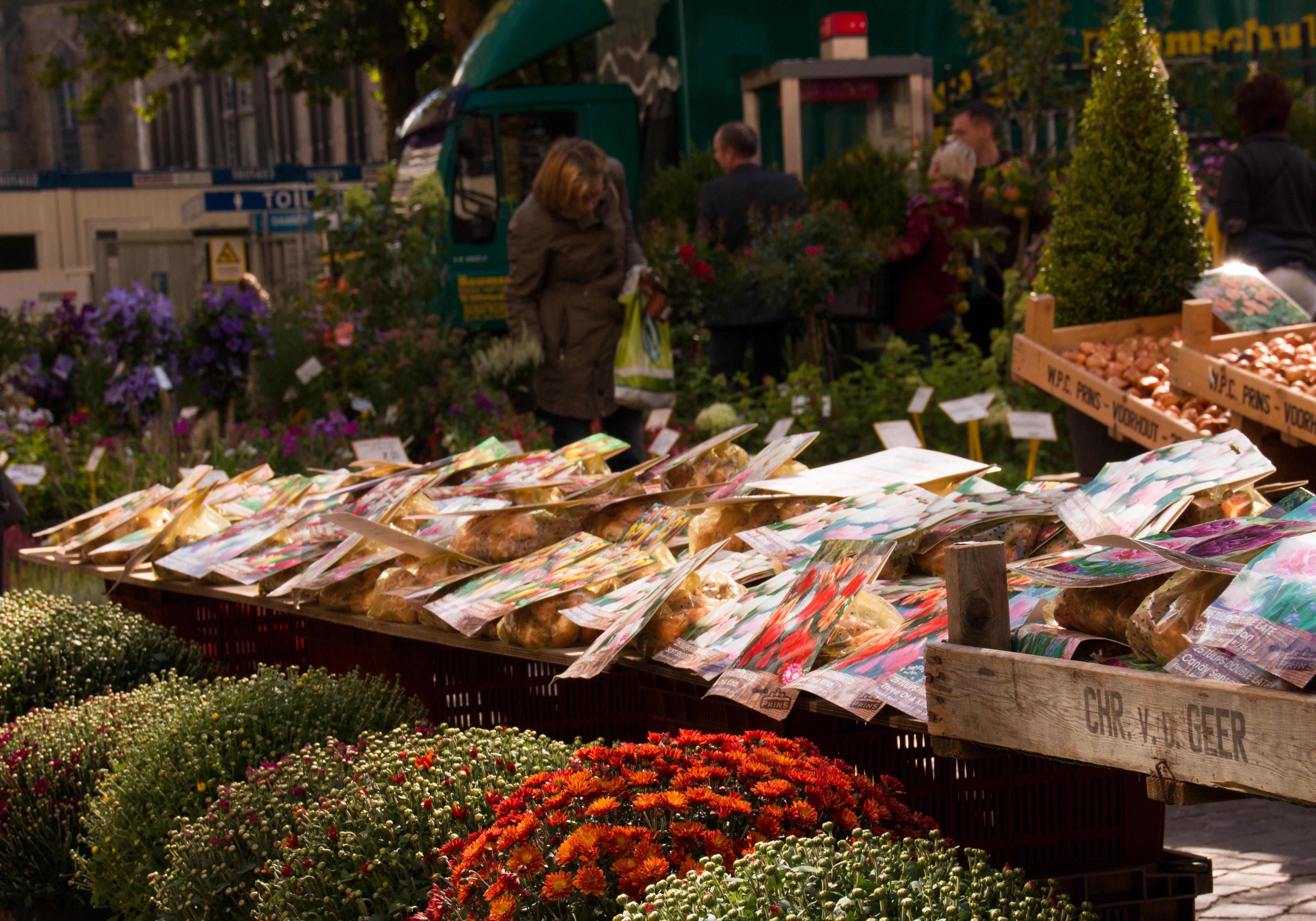 Blumenzwiebeln und Sträucher auf dem Bremer Blumenmarkt in der Innenstadt