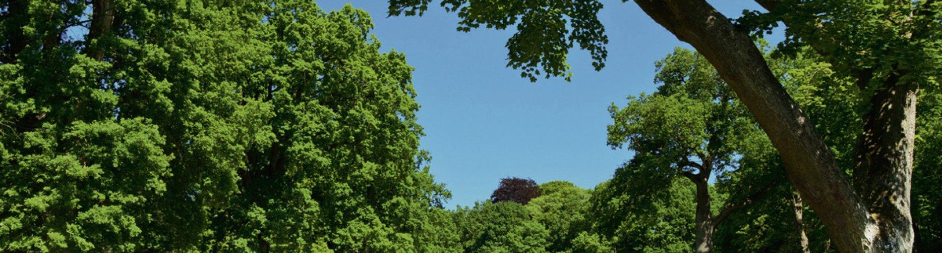 Ein Weg führt durch eine Parkanlage mit weitläufiger Wiese und Bäumen