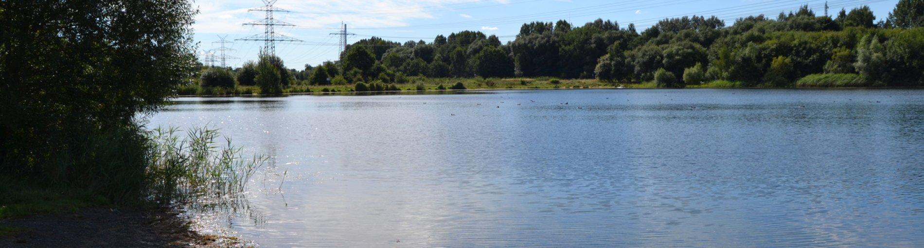 Der Sportparksee Grambke, links im Bild ein Baum, auf der anderen Seite des Sees ebenfalls Bäume.