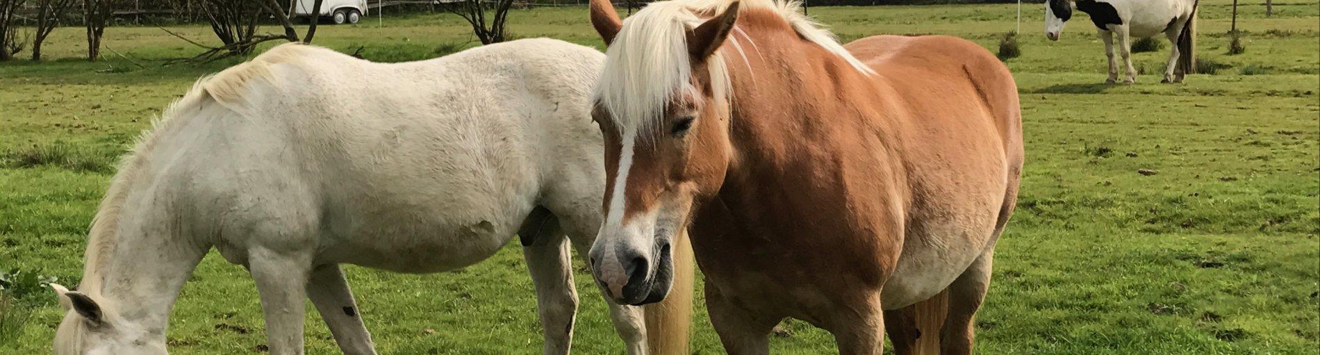 Pferde stehen auf einer grüne Wiese