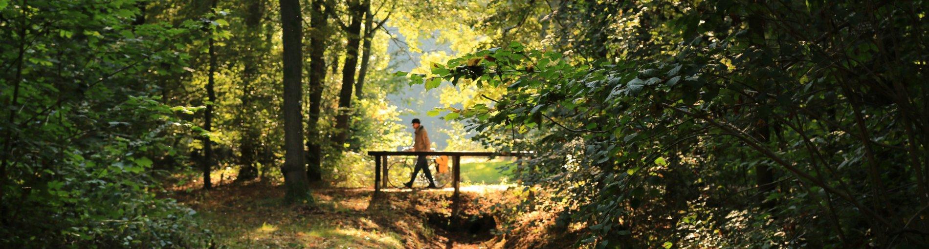 Herbstliche Stimmung im Bremer Stadtwald