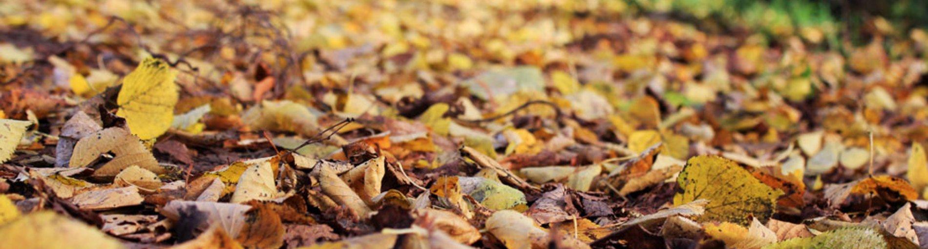 Ein brauner Blätterweg im Herbst.