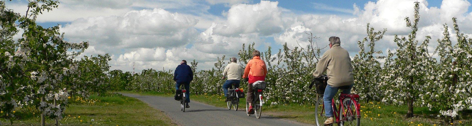 RadfahrerInnen vor blühenden Bäumen