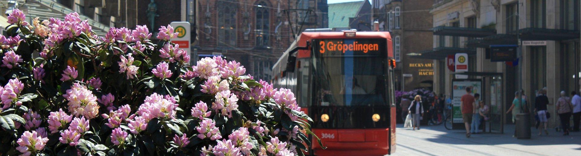 Die Linie 3 in der Obernstraße, links im Vordergrund ein blühender Rhododendron.