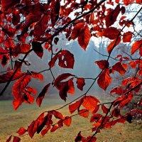 Bäume mit rotem Herbstlaub im Bürgerpark