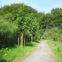Baum-Lehrpfad im Naturschutzgebiet Krietes Wald