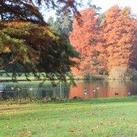 Bunt gefärbte Bäume und schwimmende Enten im Bürgerpark