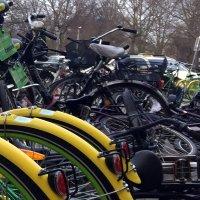 Mietfahrräder in grün und gelb