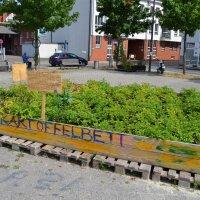 Ein Beet mit grünen Pflanzen steht auf grauem Beton; Quelle: bremen.online GmbH - MDR