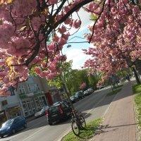 Ein Magnolienbaum in voller Blüte, dahinter eine Straße mit Autos; Quelle: MDR/privat