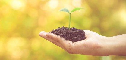 Hände halten sorgsam ein zartes, grünes Pflänzchen, das aus einem kleinen Haufen Erde wächst.