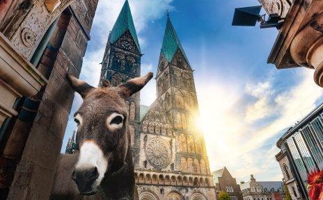 Ein Esel und ein Hahn blicken durch einen der Bögen am Rathaus, im Hintergrund der von der Sonne beschienene Dom