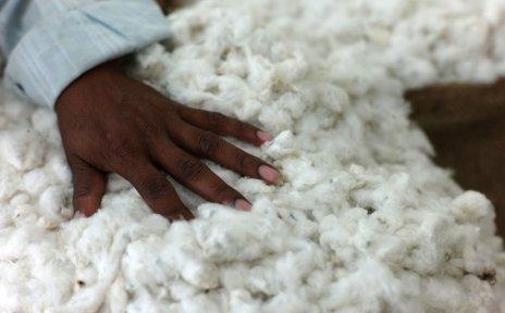 Eine Hand berührt weiße Baumwollfasern.