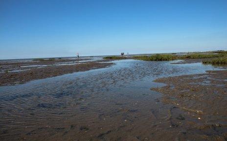 Das Wattenmeer mit einzelnen Gras- und Wasserstellen
