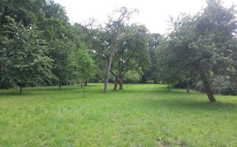 Streuobstwiese in der Osterholzer Feldmark