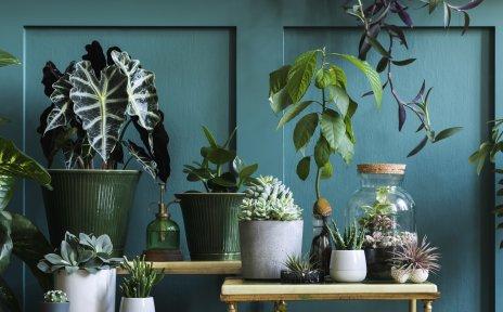 Verschiedene Pflanzen stehen in Blumenkübel und auf kleinen Tischen vor einer grünen Wand.